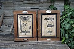 Tabuľky - Entomologické obrázky zo starého kabinetu - 9668623_