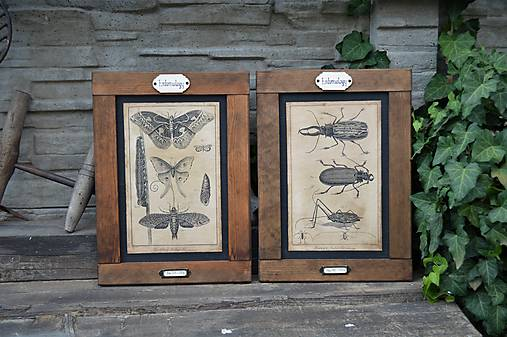 Entomologické obrázky zo starého kabinetu