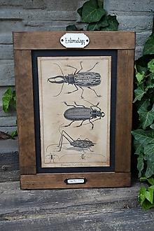 Tabuľky - Entomologické obrázky zo starého kabinetu (Chrobáky) - 9668607_