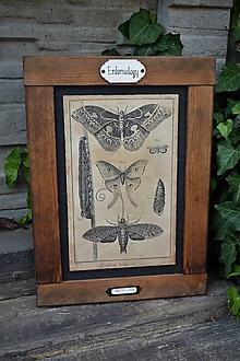 Tabuľky - Entomologické obrázky zo starého kabinetu (Motýle) - 9668612_