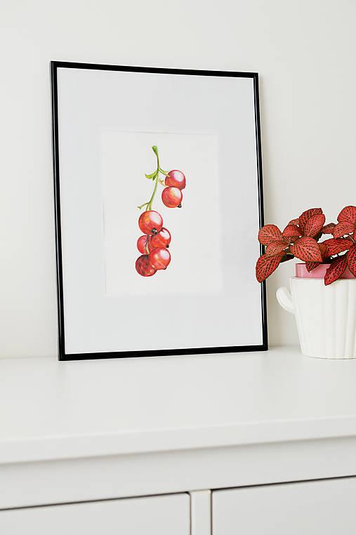Obrazy - Akvarelová maľba - Červené ríbezle - 9671906_