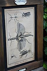 Tabuľky - Entomologické obrázky zo starého kabinetu - 9674652_
