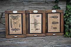Tabuľky - Entomologické obrázky zo starého kabinetu - 9674656_