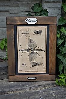 Tabuľky - Entomologické obrázky zo starého kabinetu (Kobylky) - 9674649_
