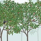 Vtáčí les - leto - detail