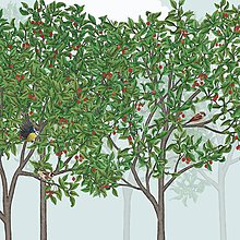 Grafika - Vtáčí les - leto - detail - 9690137_