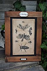 Tabuľky - Entomologické obrázky zo starého kabinetu - 9692055_