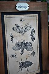 Tabuľky - Entomologické obrázky zo starého kabinetu - 9692057_