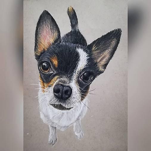 Kresba psíka A4