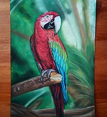 Kresby - Papagáj A4 - 9701188_