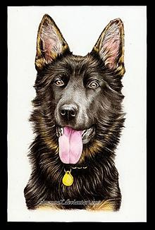Obrazy - Farebný portrét psíka na objednávku - 9702225_