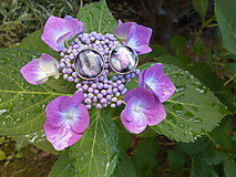 Náušnice - Oči hortenzie