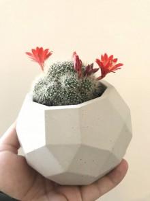 Iný materiál - Rastlinka - iba s kvetináčom - 9718029_
