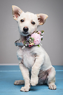 Pre zvieratká - Obojok pre psíka Artic dream - 9720810_