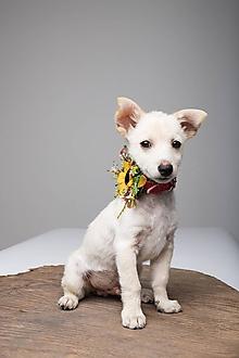 Pre zvieratká - Obojok pre psíka Summer poesy - 9722685_