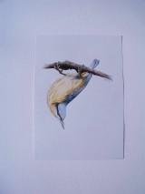 Kresby - Kresba: Brhlík akrobat - 9729422_
