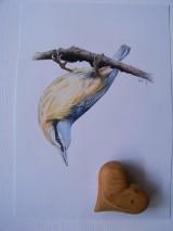 Kresby - Kresba: Brhlík akrobat - 9729423_
