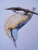 Kresby - Kresba: Brhlík akrobat - 9729425_