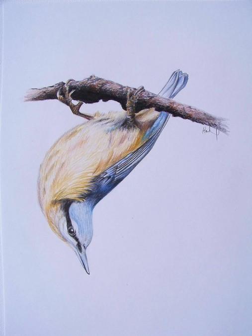 Kresba: Brhlík akrobat