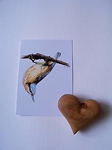 Papiernictvo - Pohľad-nica: Brhlík akrobat - 9738019_