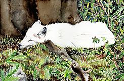 Muzeálna reprodukcia ilustrácie - Lišiak
