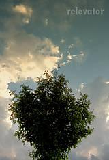 Fotografie - Stromček - 9743507_