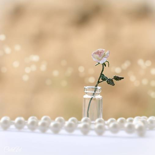 Ruža - miniatúra