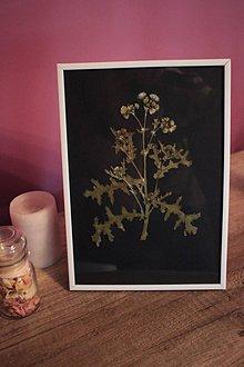 Obrázky - Originálne botanické dielo sušených lisovaných kvetov - 9755608_