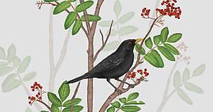 Grafika - BLACKBIRD ON ROWAN TWIG - 9770030_