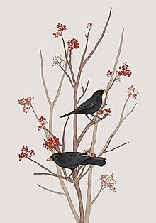 Obrazy - BLACKBIRD ON ROWAN TWIG 2 - 9781006_
