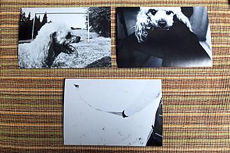 Papiernictvo - Pohľadnice v Zľave - Priateľ človeka - 9782720_