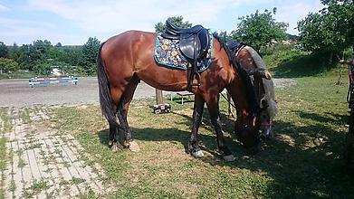 Pre zvieratká - Podsedlovka - 9804614_