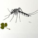 Kresby - Komár