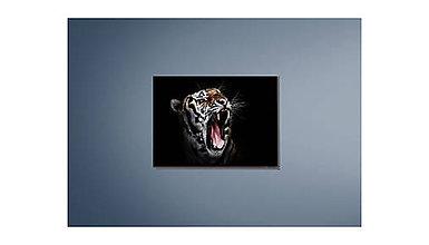 Grafika - Tiger - 9806811_