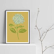 Grafika - Botanika - Hortenzia II. - Art Print - 9826873_