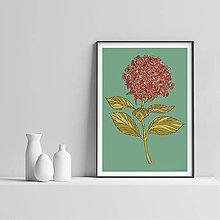 Grafika - Botanika - Hortenzia I. - Art Print - 9826901_