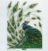 - Ryžový papier na decoupage -A4-R323 - páv, peacock, perie - 9835550_