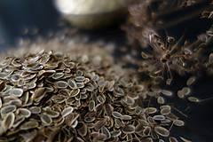 Potraviny - semienka kôpru- veľké balenie - 9840120_