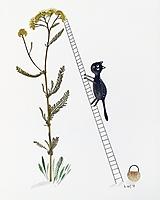 - Mačka, rebrík,  rebríček   koláž / originál maľba  - 9844865_