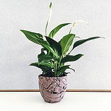 Nádoby - Scagliola - kvetináč - 9865575_