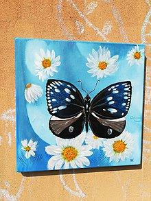 Obrazy - Modrý motýľ - 9877767_