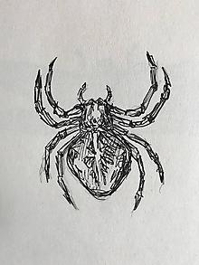 Kresby - Pavúk - 9882544_