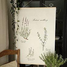 Kresby - Botanický plagát - liečivé rastliny - 9894159_