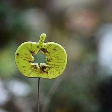 Dekorácie - Zápich jablíčko - Jarní louka - 9893083_