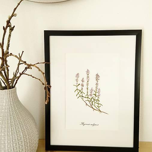 Obrázok akvarel - materina dúška