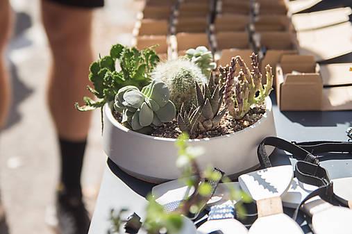 Betónová miska s rastlinkami