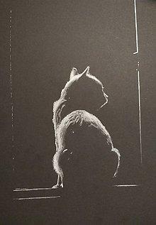 Obrazy - Mačka na okne - 9914591_