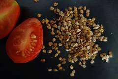 Potraviny - domáce semienka rajčín- červené hruštičky 2018- ZĽAVA - 9927106_