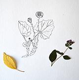 Kresby - Podbeľ - 9955537_