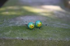 Náušnice - Puzetky Millefiori tyrkys so žltou - 9978219_